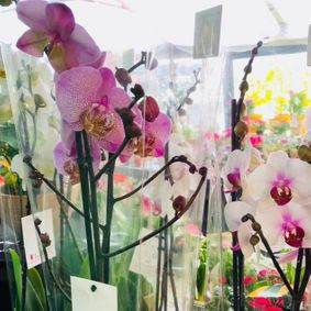An example of the beautiful orchids that we sell.