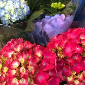 Some colourful flowers that we sell.