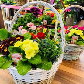 We sell baskets of flowers.